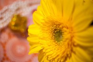 花の写真(ガーベラ)